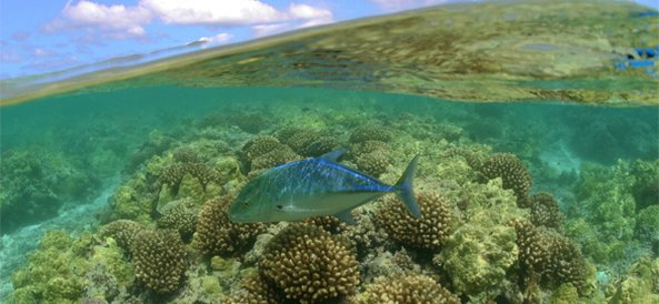 Fish in the northwestern hawaiian islands