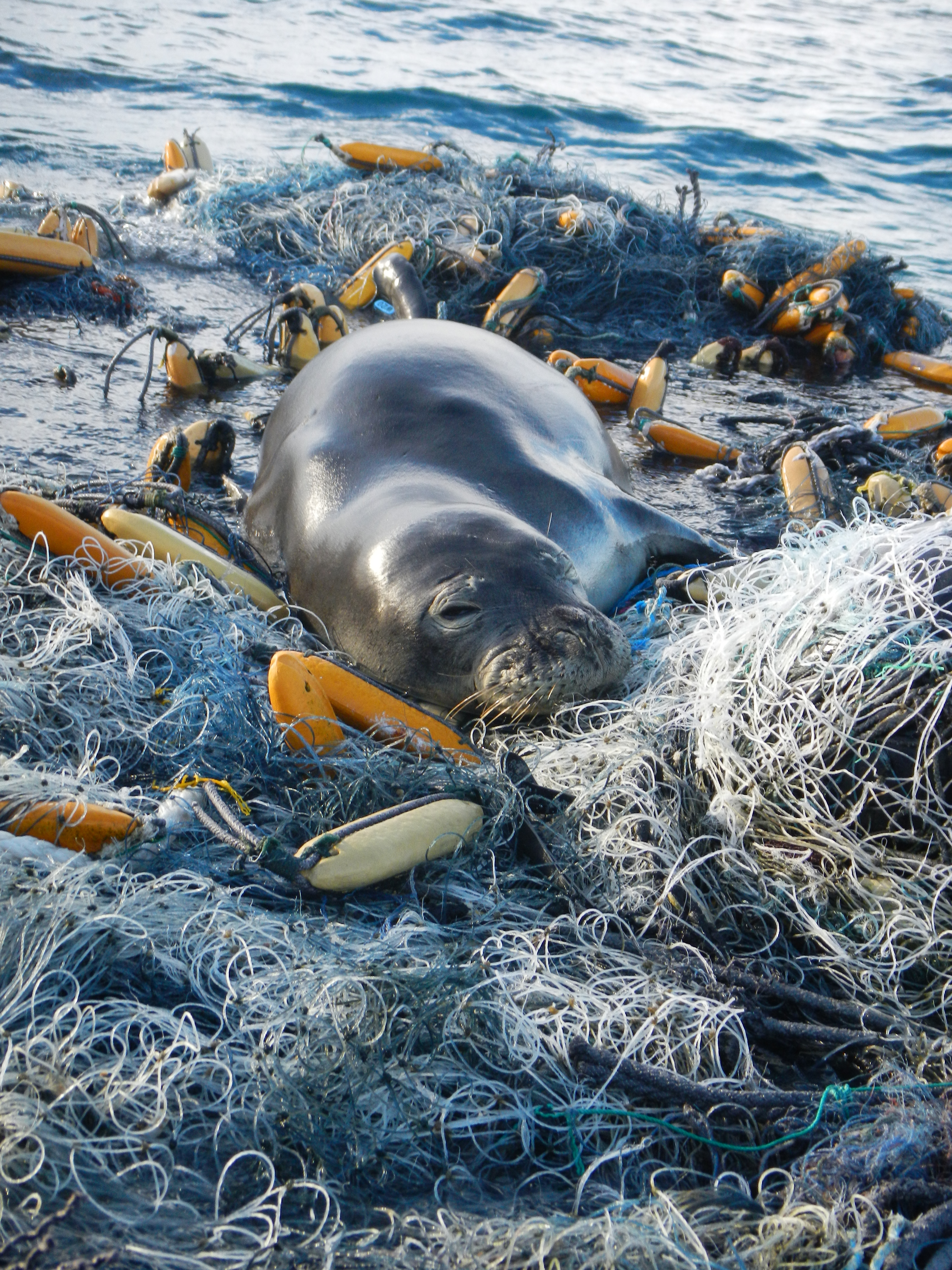 marine conservation We believe too much is being taken out and too much is being put into our seas our scientists, campaigners, volunteers, advocates, data experts, fundraisers, divers and researchers are all.